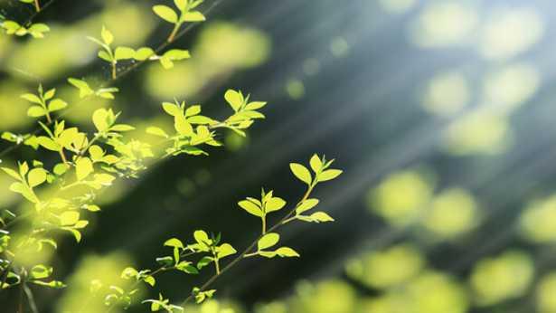 41. Was ist die Natur der Liebe Gottes?